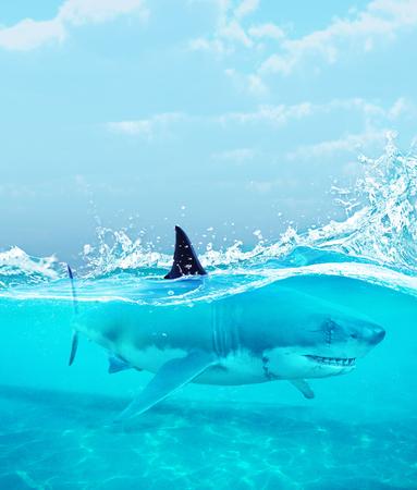 Shark under water,3d illustration Stock Photo