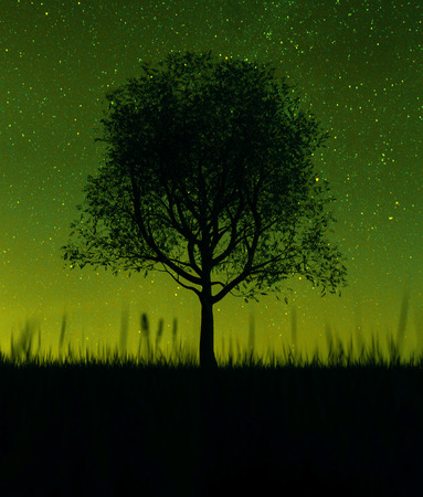 Silhouette tree in grass field at night sky,3d rendering