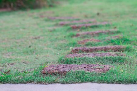Red stone walkway On the green lawn in front of the house. The image is partially clear. 免版税图像