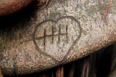 love symbol on banyan tree branchs photo