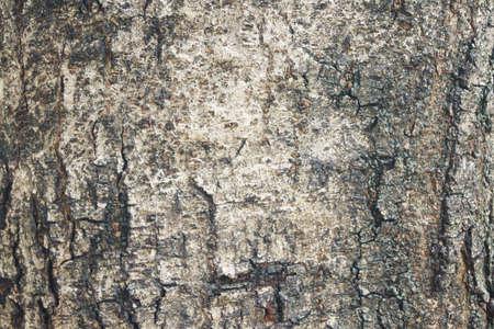 barnwood: La textura de madera marr�n como fondo.