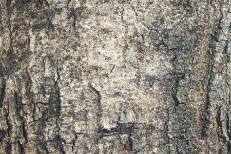 barnwood: The brown wood texture as a background.