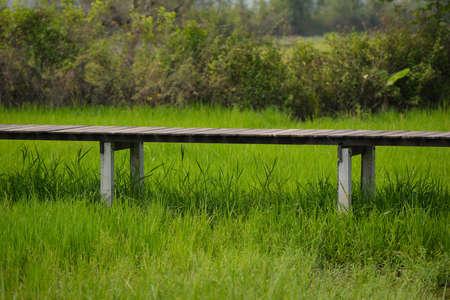 long term goal: Long wooden bridge in rice farm