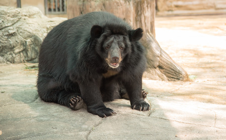 similar images preview: Image of a black bear