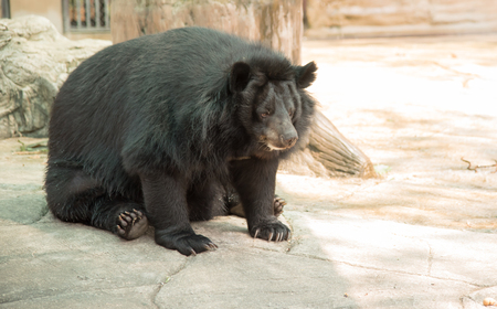 Image of a black bear