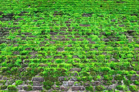 Old brick wall covered with green moss photo