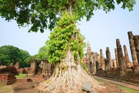 sukhothai: Bodhi tree at Wat Mahathat Sukhothai Historical Park, Sukhothai, Thailand
