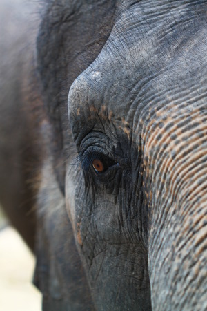 feeling sad: Elephant feeling sad in his eye Stock Photo