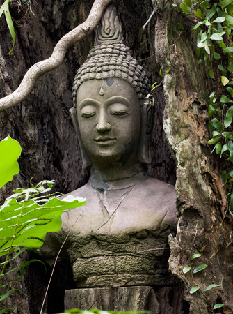 buddha face: Buddha face statue stucco covered by dead tree timber in ancient Thailand Stock Photo