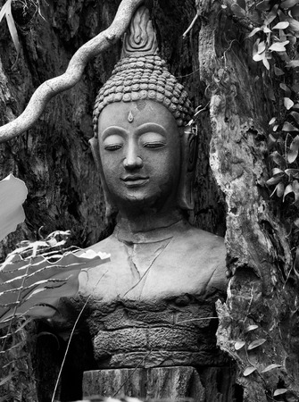 buddha face: Buddha face statue stucco covered by dead tree timber black and white