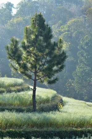desolate: tree