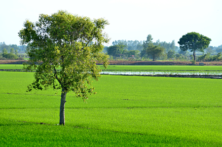 land scape: tree in land scape