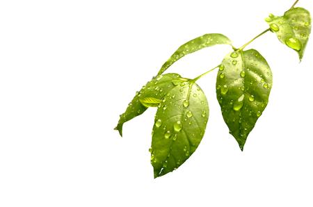 leaves Zdjęcie Seryjne