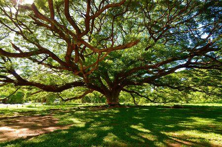 envoronment: big tree