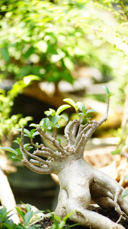 tree in Home garden
