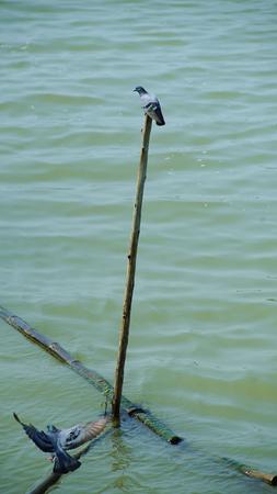 Birds life in Thailand river