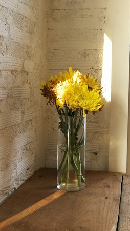 sunflower in bottom glass. background white brick wall Zdjęcie Seryjne