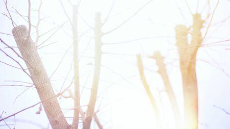 Dry tree in winter season .Background sunset blur