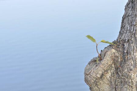 wonderful nature background space .Dry tree in water Zdjęcie Seryjne