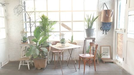 Indoor garden plant .natural interior decoration living room in retro style