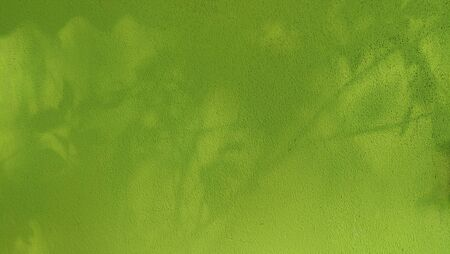 green wall background.the tree shadow on the wall Stock fotó