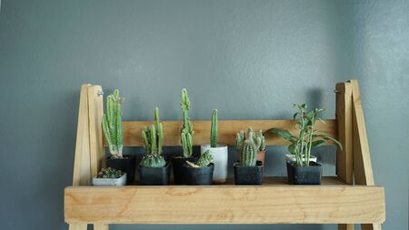Cactus tree on wooden table .Indoor garden plant .Background  is space  grey wall