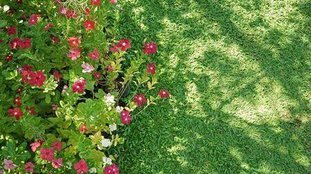 flowers  and green grass in garden Stock fotó