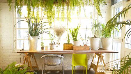 Indoor garden background .lifestyle idea