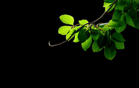 Green tree on dark background .It on sunrise shade in art nature background Stock fotó