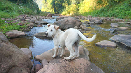 Puppy white dog  on stone in nature streams