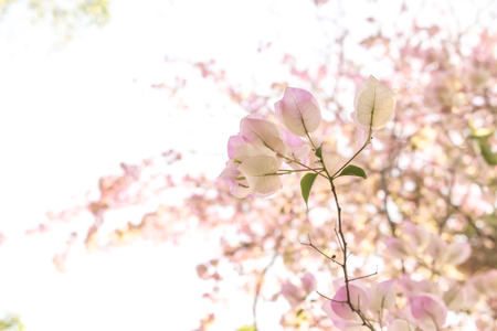 Pale pink flowers with blur pale pink flowers background stock photo pale pink flowers with blur pale pink flowers background stock photo picture and royalty free image image 54622163 mightylinksfo