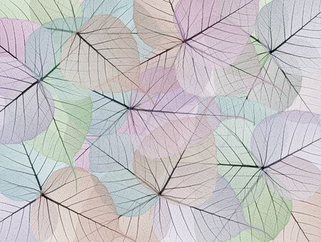 Skeleton leaf abstract background  photo