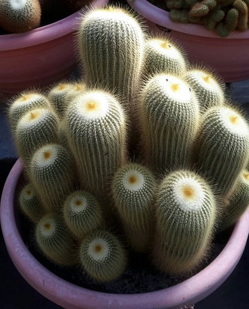 angiosperms: Cactus number 6
