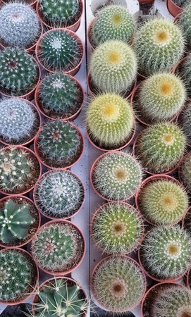 angiosperms: Cactus number 9