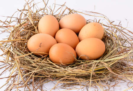 eggs in the grassy nest isolated on white background photo