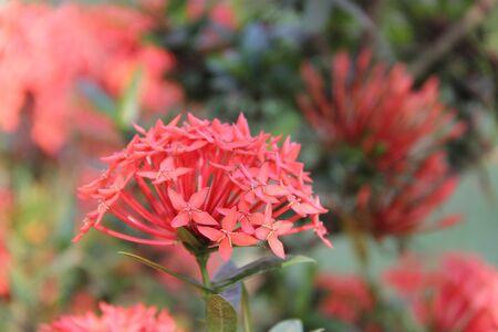 spike: Flower spike
