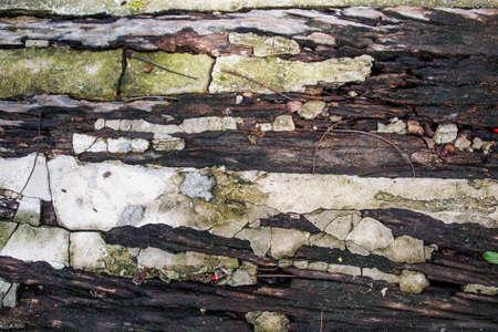 ruin: Ruin cement wooden floor