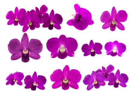 Isolated purple orchid on the white background.