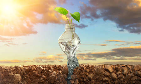 Planting trees in bottles on natural background. Conservation of forest concept