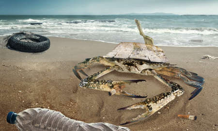 Crab on polluted beach. Car tire and plastic bottles pollution in muddy puddle on beach. (Environment concept) Imagens