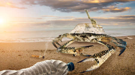 Crab on polluted beach. plastic bottles pollution in muddy puddle on beach. (Environment concept)