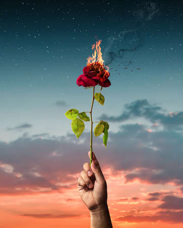 Hand held burning red rose. Love concept with flower and fire