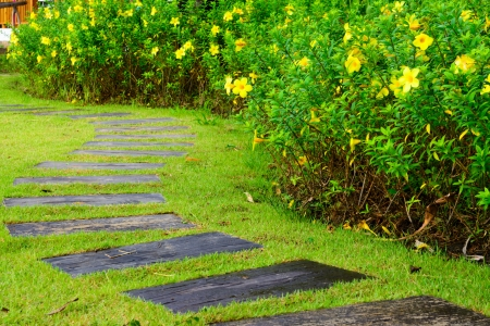 The path in the garden photo