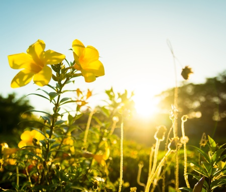 flare up: yellow flowers and grass at sunsets