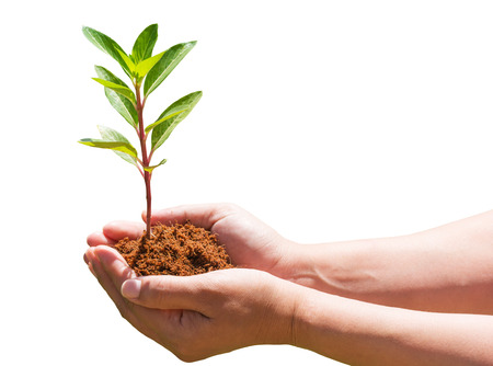 hand holding and planting new tree with white background photo