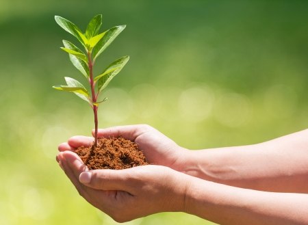 hand holding and planting new tree with nature background photo