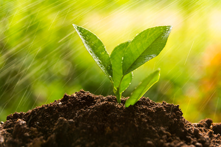 planting tree, sprout Standard-Bild