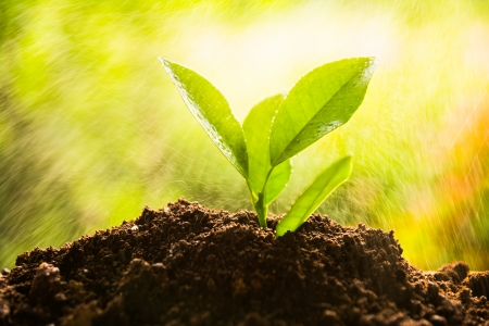 planting tree, sprout Stock Photo