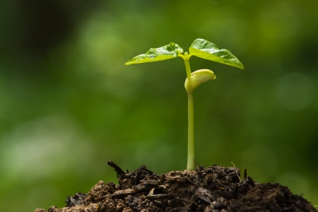 Green sprout growing from seed Standard-Bild