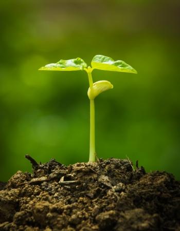 緑の芽が種からの成長 写真素材 - 23293981